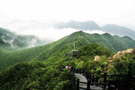 Nanshan Bamboo Sea | Zhejiang
