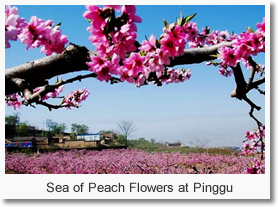 <Beijing Day Tour> Spring Excursion