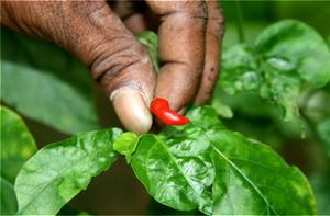 Matale Spice Garden