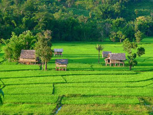 Unwind in Laos backyard