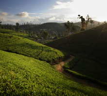 7 Days Ceylon Tea and Sea Escape